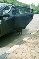 * (Sakulchai Sikitikul) Tags: leica dog film car kodak leg ernst snap summicron 400 f2 ttl m6 wetzlar 085 leitz ultramax collapsible 5cm