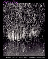 Wetland 5. (Art's Eye photographic) Tags: water reeds countryside flora westsussex unitedkingdom marsh habitat arundel wetland sedges wetlandenvironment