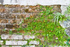 _MG_6470 (parinya_lertwattanasakul) Tags: old trees plants plant detail tree texture window leaves stone wall yard plane garden moss backyard natural landscaping grunge steps parks off structure trellis neighborhood foliage climbing sycamore bark frame blocks aged peel shrubs wisteria stacked peeled peels buttonwood hardscape platinus pulbic twines