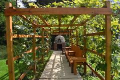 grapevine avenue (baydu) Tags: pennsylvania path grapes grape pathway grapevine