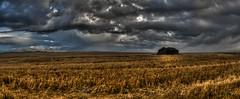 Stubble Field Storm (H.B. Mejia) Tags: summer abandoned sunrise dark spectacular dawn gloomy ominous rainy stunning lonely prairie hayfield daybreak ominousskies stubblefield summerweather summerclouds dramaticskies southernalberta dramaticweather stunningphotography spectacularphotography prairiemeetsmountains