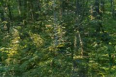 Park Life 7 (pni) Tags: park light fern tree green suomi finland leaf helsinki centralpark multipleexposure trunk helsingfors tripleexposure multiexposure keskuspuisto skrubu pni centralparken pekkanikrus