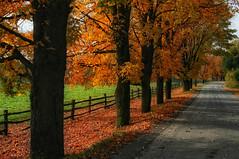 La Route des Couleurs (Renald Bourque) Tags: autumn canada color nature automne canon photographer quebec québec arbre lachute xti renald