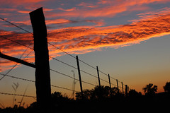Fenceline Sunset (Pics by Abigail) Tags: trees sunset sky orange black clouds rural fence evening shadows country bluesky dirtroads sillhouette barbedwirefence fenceline hff canon50mm14 fencefriday