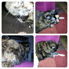 28.10.2913 - 301/365 (noisy__nisroc) Tags: pet animal collage cat mobil bonsai 365 flickrandroidapp:filter=none