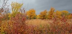 Before a Fall Storm (thefisch1) Tags: blackandwhite pond nikon moody calendar fallcolors secret kansas remote nikkor1424 monochromd