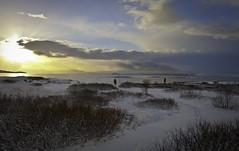 Við Þingvallavatn (geh2012) Tags: sun lake snow tree clouds iceland thingvellir þingvellir ísland tré snjór vatn sól ský geh þingvallavatn gunnareiríkur