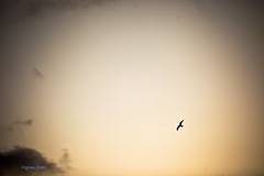 Circle (Just Add Light) Tags: morning sun sunlight lake beauty wisconsin night jaune sunrise rouge dawn soleil bright michigan lac greatlakes milwaukee daybreak matin gnas leverdusoleil justaddlight lacdegrand