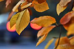 blad-en-licht (Don Pedro de Carrion de los Condes !) Tags: auto color licht bokeh herfst donpedro kleuren herfstblad achterlicht