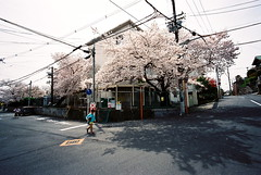 a puffy memory of spring (troutfactory) Tags: school film japan spring blossoms wideangle   cherryblossoms osaka analogue superia400 kansai cherrytree viewfinder  toyonaka  inbloom  15mmheliar voigtlanderbessal