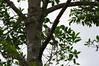 Peñaliza, Santander, Colombia, Caminata 2, 02 2014 (jlfaurie) Tags: rojas peñaliza santander colombia colombie paseo caminata walk ballade marche nature naturaleza cacao cocoa cañadeazúcar sugarcane canneàsucre trapiche papillon butterfly mariposa oiseau bird pájaro mpmdf mpm mechas elivra irma clara ines pinilla marquez chapeau calor chaleur hotweather