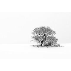 Black on White (horstmall) Tags: schnee winter snow tree germany deutschland snowy hiver verschneit neige allemagne arbre asch baum hochsitz badenwürttemberg schwäbischealb swabianalps lenningen krebstein ansitz realwinter albtrauf jurasouabe jägerei richtigerwinter albhochfläche horstmall märzwinter weidwerk
