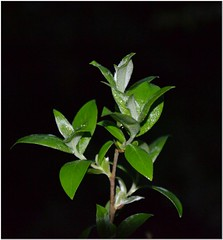 Willow (MaxUndFriedel) Tags: trees nature water rain weather night season drops spring seasons bushes bume wetter
