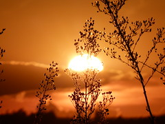 Outono | Autumn (IgorCamacho) Tags: autumn sunset brazil sun fall sol nature paraná colors brasil cores landscape natureza paisagem southern atmosfera outono sul anoitecer