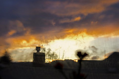 this is a cosmos (1crzqbn) Tags: sliderssunday lensbaby sunset composer sky