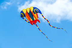 Trilobite Kite Flying on Australia Day