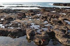 264-Galapagos_Houwing (Beverly Houwing) Tags: beverlyhouwing 2017 squidgallery puertoegas santiago galapagos ecuador equator island pacificocean tidepool lavarocks coast