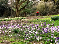 Riding into spring (S Clark) Tags: oxleaswood wood ancientwoodland woodland spring london londonist southeastlondon eltham shootershill youth cycle cycling canon canonpowershotg12
