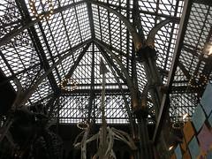 That roof! (cleanskies) Tags: ounhm oxfordnaturalhistorymuseum museum tyrannosaur chicken giantchicken skeleton