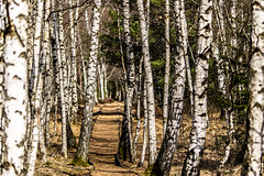 Secret Track (*Capture the Moment* (OFF till End June)) Tags: 2017 bavaria bayern bokeh bäume filzn fotowalk germany landschaften matthias natur nature sigmadg120400mm14556apoham sonya7m2 sonya7mii sonya7mark2 sonya7ii trees bokehlicious