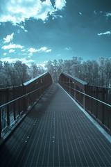 Infrared Bridge (Chad Ajamian) Tags: infrared australia narrabeen nsw ir nature bridge blue ice surreal