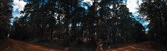 road (ashleemdunlap) Tags: contrast forest dirt road lost hike texas tx davy crockett national panorama panoramic shot red clay trees pine silhouette alien skin exposure x iphone 6s cellphone photography cell phone outdoor outdoors travel explore