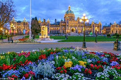 BC Legislature on a Spring Evening (david byng) Tags: britishcolumbialegislature flowers city 2017 spring britishcolumbia vancouverisland canada parliamentbuildings victoria flickrtravelaward