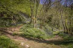 Spring path (Thos A.) Tags: tree trees nature natur flowers flower path sun light eos canon 1200d nièvre morvan chemin fleur spring printemps grow roadsign green