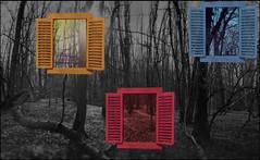 Windows of your mind (zdm69) Tags: outdoor windows colorful landscape forest olympus omd em1 zdm69 7dwf dwwg
