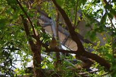 Bird in the tree (caro-jon-son) Tags: eden