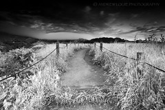 The Back Road (Andrew Louie Photography) Tags: back road golden gate national park san francisco bay area black white bw digital photography andrew louie hillside fog clouds