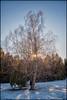 DSC_2747 (pettak) Tags: västerort sweden stockholm sverige sthlm ängby judarn