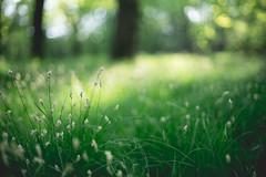 Undergrowth (cristiano_rizzi) Tags: undergrowth sottobosco erba grass 50mm 14 pentax sonya7 alpha7 a7 sony light lights shadows sunset