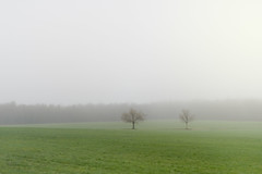 Simple Fog (DaveLawler) Tags: field fog trees branches green spencer massachusetts newengland spring landscape minimalist