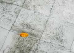 Hoja (Lara Santaella) Tags: hoja leaf autumn otoño minimalism minimalismo orange lines texture water agua líneas naranja