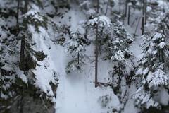 Tamanawas Falls (Tony Pulokas) Tags: mounthood blur oregon winter tamanawasfalls coldspringcreek tilt bokeh tree forest hemlock westernhemlock snow eastforkhoodriver westernredcedar douglasfir