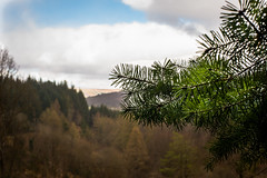 welcome shelter (grahamrobb888) Tags: nikon nikond800 scotland birnamwood birnam perthshire trees forest sky