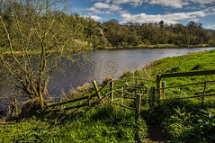 The Kissing Gate (Brian Travelling) Tags: kissinggate kissing gate metal iron tree grass green rivertweed bluesky fluffyclouds trees tranquil tranquility serene serenity setting romantic animals south east scotland england border pentaxkr pentax pentaxdal peaceful peace