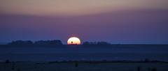 Tatooine Sunset (HHH Honey) Tags: green sonya7rii salisburyplain wiltshire spring landscape blackheath theblackheath trees sony70300g sunset silhouettes observationpost ethereal starwars tatooine 6outofthisworld 6 alien