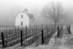 Wine country, Ontario (Earl Reinink) Tags: spring weather fog historic historicbuilding niagara ontario canada monochrome blackandwhite architecture vine vineyard wine winecountry earl reinink earlreinink hridattdia