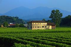 V - Vigneti nel trevisano (marvin 345) Tags: veneto italy italia casa casavecchia house oldhouse vigneti natura terrorio edificio