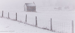 April White-Out    #HappyFenceFriday (maureen.elliott) Tags: hff happyfencefriday rural snowy barn farm fence snow white landscape