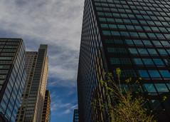 DSC_8962-Edit (pattyg24) Tags: architecture chicago illinois buildings clouds reflection skyscraper tree windows