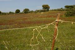 Viúvas_9bb (x-lucena) Tags: viúvas alentejo azinheira quercusilex fence hff