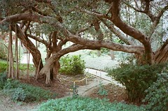 000373940013 (Nai.) Tags: expiredfilm lomographyiso100 colornegativefilm 135film pentaxmz3 slr naturalcolors plants green trees