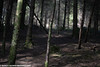 Spooky Woods (scott calnon) Tags: woods cann swisbest plymbridge plymouth spooky scary atmospheric dark atmosphere magical lighting bark wood trees forest greens