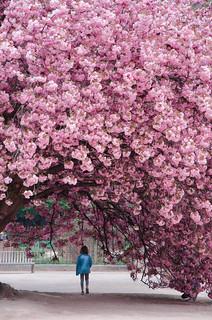 Blossom ivasion
