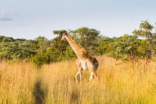 KrugerParkREIZ&HIGHRES-99