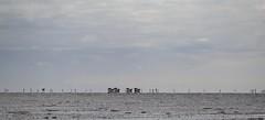 Watt path to Neuwerk island (Greby-Johann) Tags: sigma lens 150600mm horse drawn carriages april 2017 watt path neuwerk island weg pfad wattenmeer pferdekutschen pferdekutsche distanz shot entfernung meer sand wattwagen