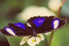 (winterprinzessin89) Tags: schmetterling summer sommer papillon butterfly nature natur nikon d3200 dslr fotografie photo photographie photography photografie outdoor
